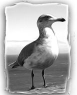 black and white photo of a seagull