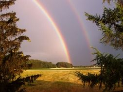 nature double rainbow
