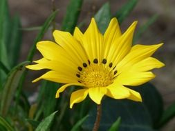 Yellow flower with black dots