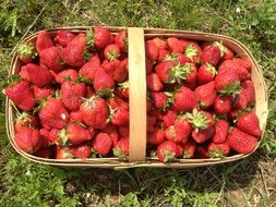 top view of strawberries in a basket