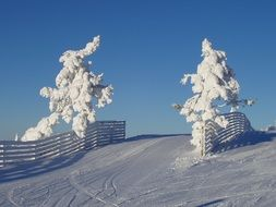 snow-covered winter trees