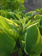 Green perennial plants