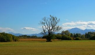 picturesque landscape with lonely tree, germany, bavaria