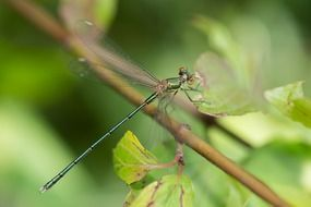 Dragonfly on stem close-up