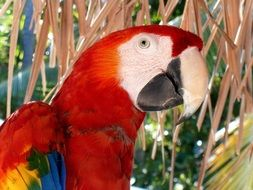 close up of a macaw parrot