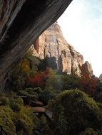 forest and scenic sandstone rocks at fall, usa, utah, Zion National Park