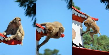 photo collage of monkey on a roof