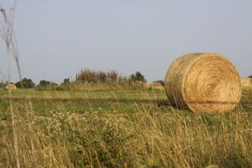 Picture of the hay bale on a field