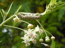striped caterpillar on a plant