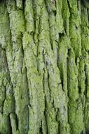 bark forest tree