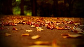 Fallen dry leaves on the track