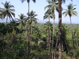 forests coconut groves western ghats