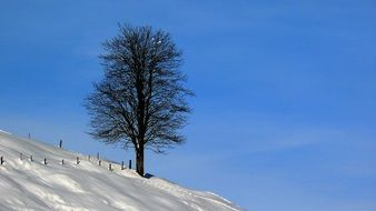 tree on a hill in the snow