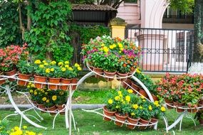 colorful garden flowers in pots thailand