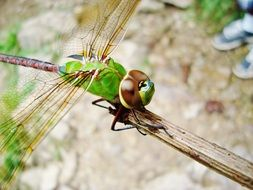 dragonfly nature insects