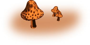 drawings of mushrooms of different sizes