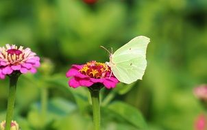 butterfly on a bright flower