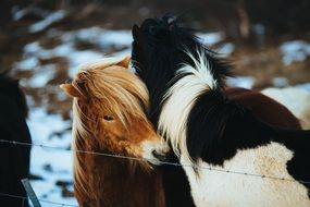 cute farm ponies pony