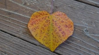 Autumn leaf on a wooden surface