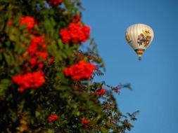 balloon in the sky and red flowers
