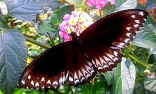very beautiful butterfly on the flower