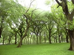 beautiful green trees on the lawn in the park