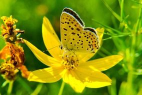 yellow butterfly on a meadow yellow flower