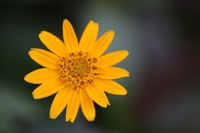 yellow flower at blurred background