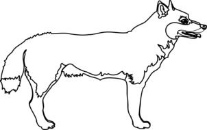 coyote animal outline drawing