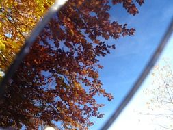 autumn trees are reflected in sunglasses