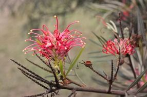 bright exotic flowers on bare branches