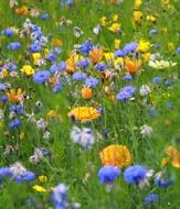 a lot of colorful flowers on a summer meadow
