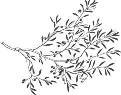Black and white drawing of olive branch with leaves and olives