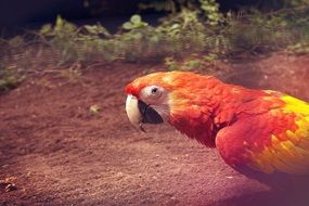 colorful parrot in the rainforest