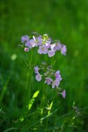 light purple meadow flowers