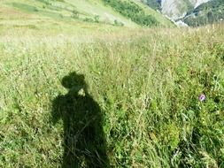 wanderer shadow on the meadow