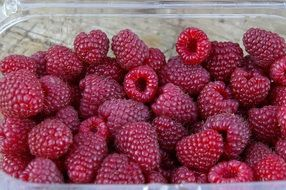 raspberries in a plastic container