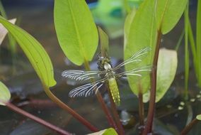 Big beautiful dragonfly in nature