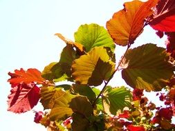 colorful leaves under the bright sun close up