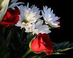 white daisies and red roses in the bouquet