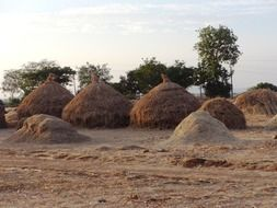 hay stacks hubli india farming agricultural