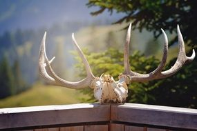 antler nature hunting