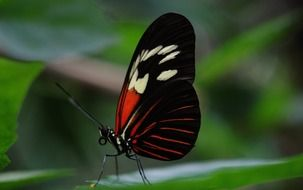 black butterfly with red pattern