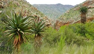 vegetation in a canyon in south africa
