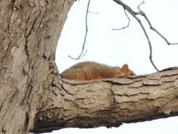 squirrel on a forest tree