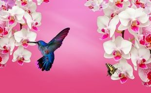 white orchid pink bird
