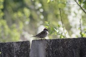 spring nature and a sparrow bird