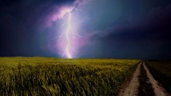 stormy sky and thunderstorm over a grain field