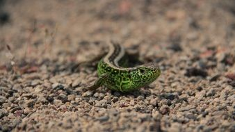 green lizard on earth in nature