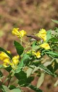bird on a plant with yellow flowers under the bright sun